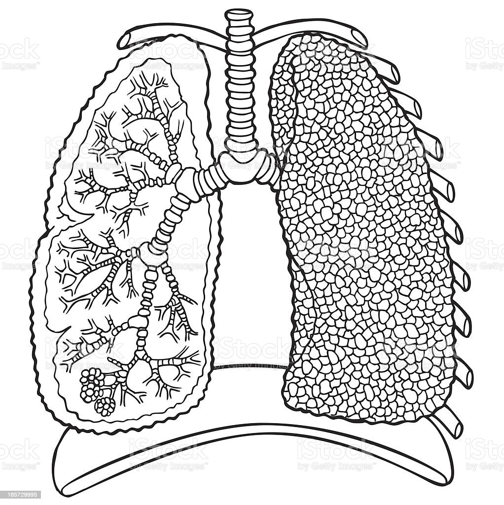 Lungs in Black and White royalty-free stock vector art
