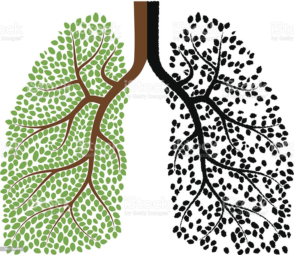 Lungs royalty-free stock vector art