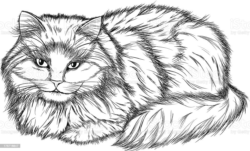lying cat, black and white pencil drawing royalty-free stock vector art
