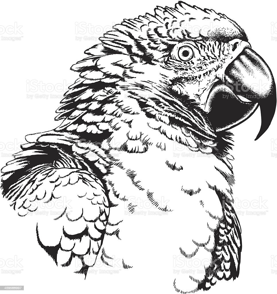 Macaw Parrot royalty-free stock vector art