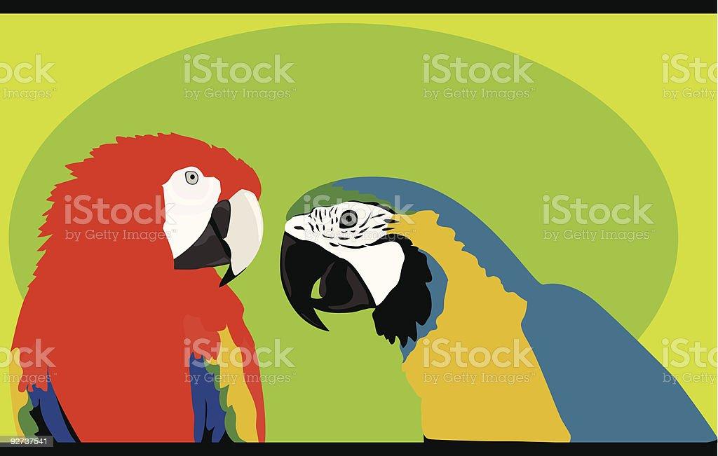 Macaws vector art illustration