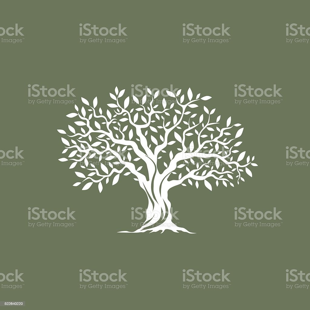 magnificent olive tree vector art illustration