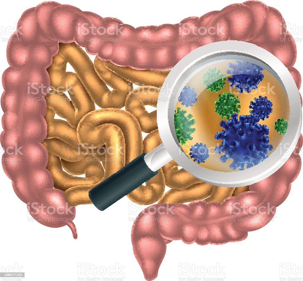 Magnifying Glass Gut Flora vector art illustration
