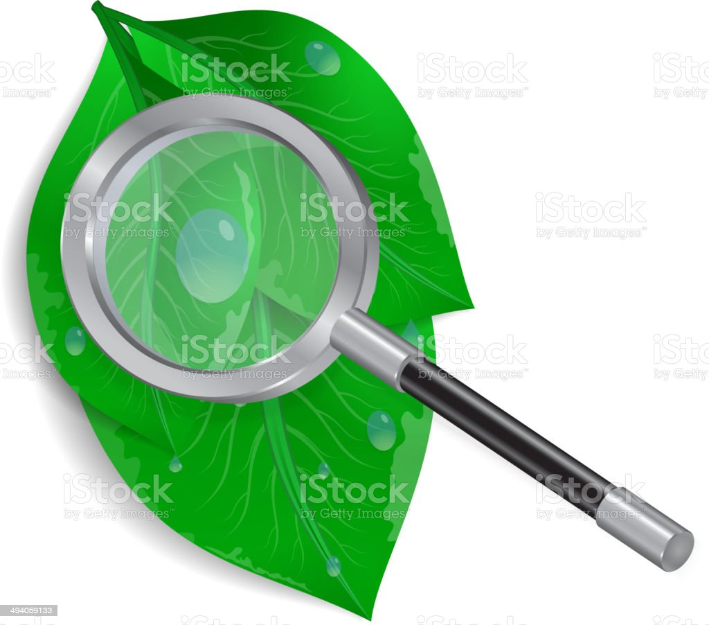 Magnifying glass with green leaves and waterdrops royalty-free stock vector art