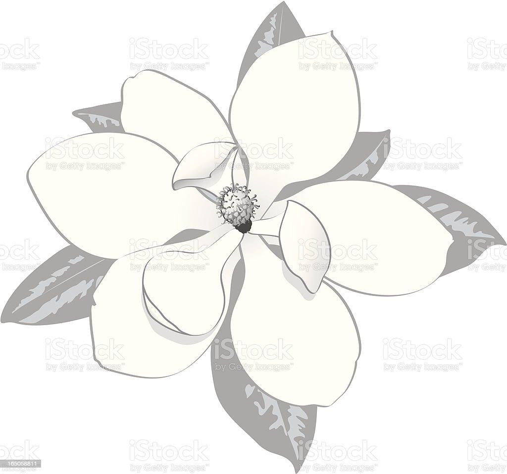 Magnolia blossom vector art illustration