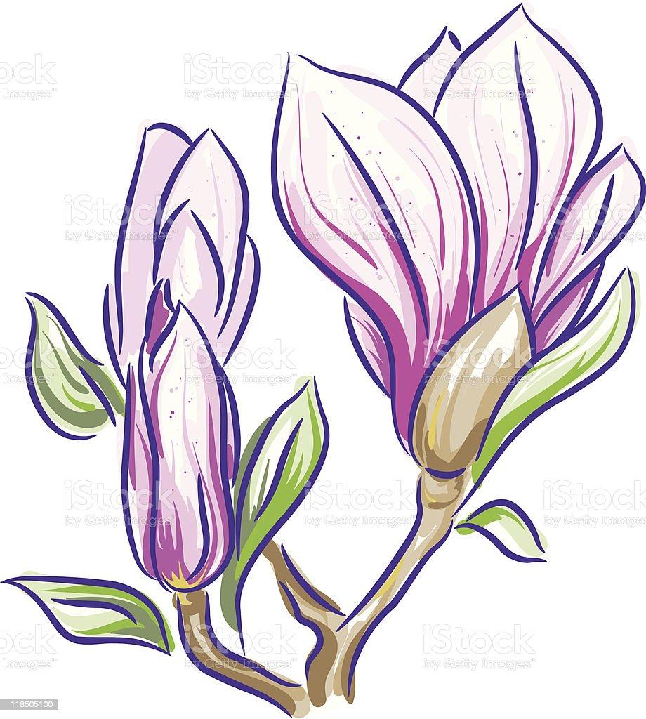 Magnolia branch royalty-free stock vector art