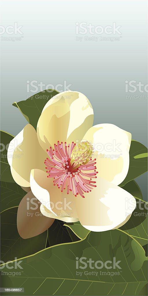 Magnolia Flower vector art illustration