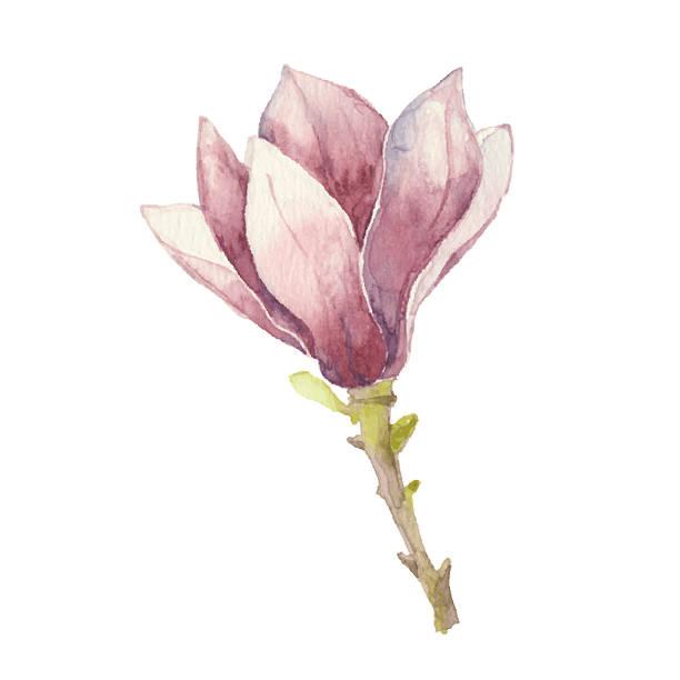 magnolia blossom clip art - photo #36