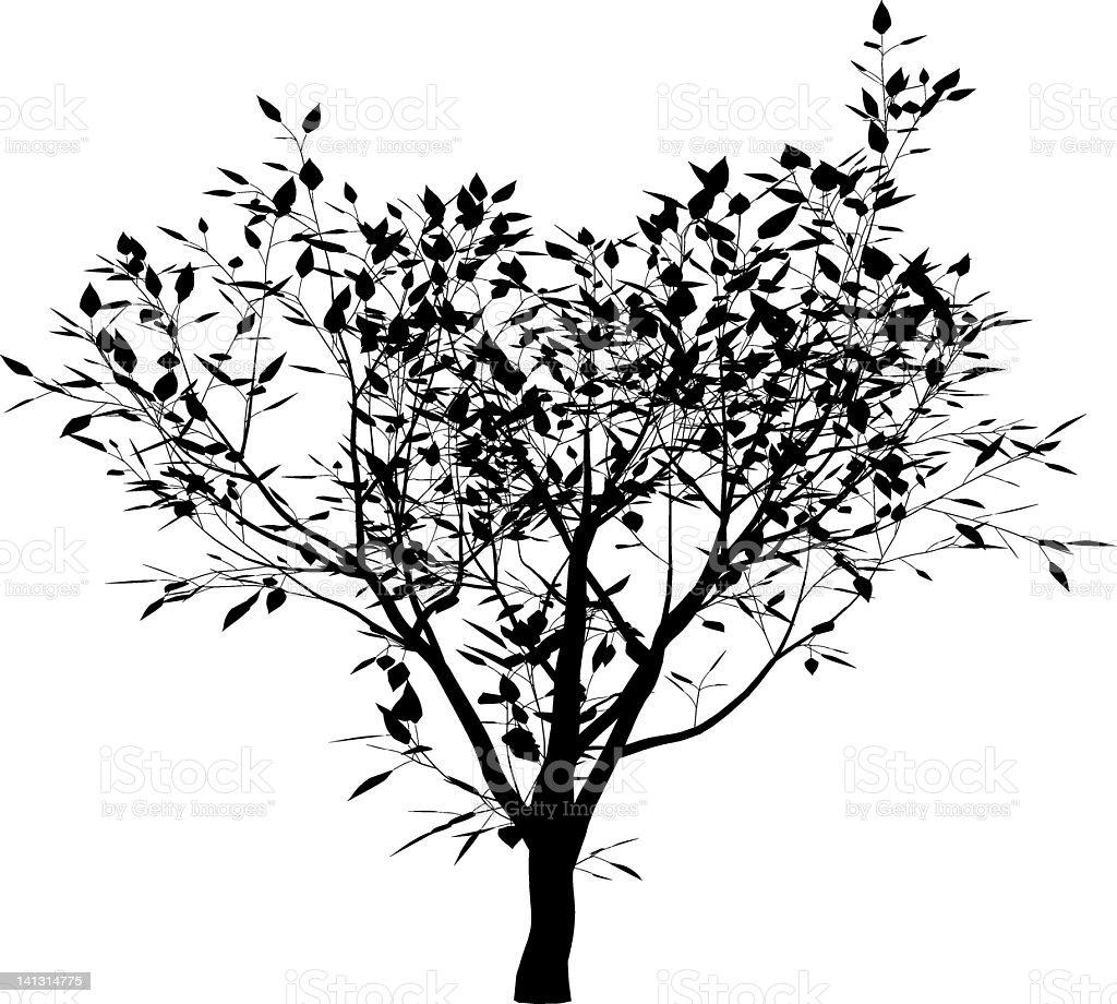 Magnolia loebneri vector art illustration