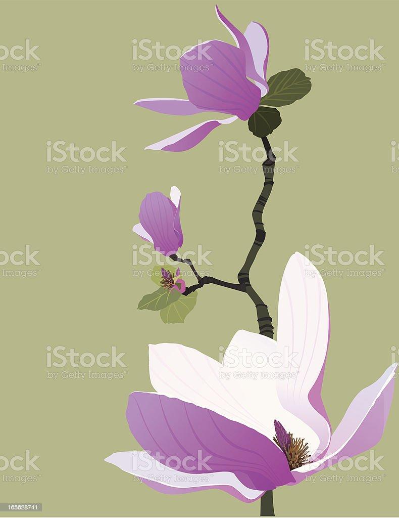 Magnolia Pink Flower vector art illustration
