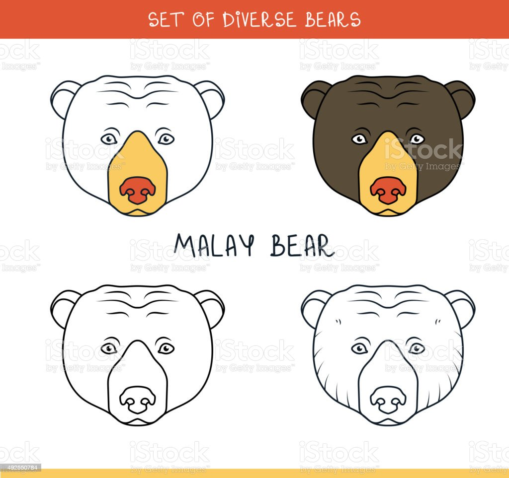 Malayan sun bear. Set isolated face, heads bear in lines vector art illustration