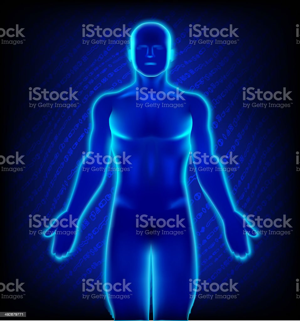 Male anatomy in x-ray view vector art illustration