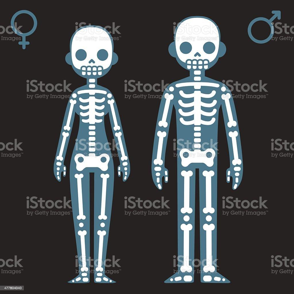 Male and female skeletons vector art illustration