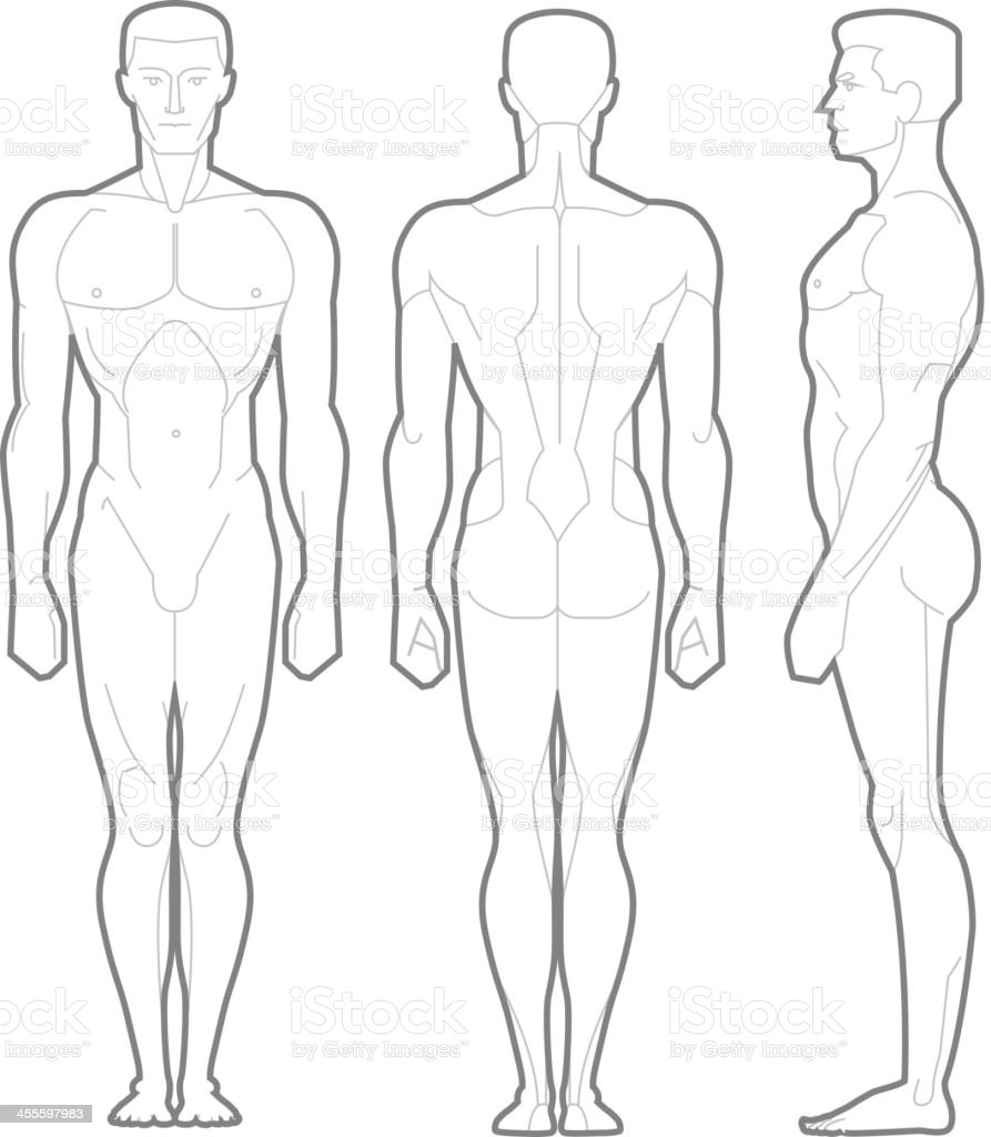 Male Body Standing Anatomical Figure vector art illustration