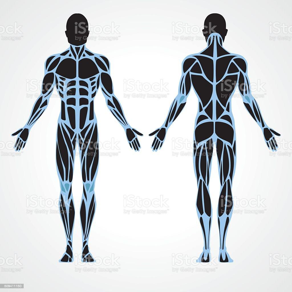 Male fitness model vector art illustration