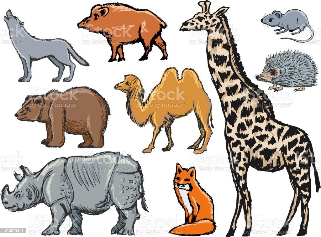 mammals vector art illustration