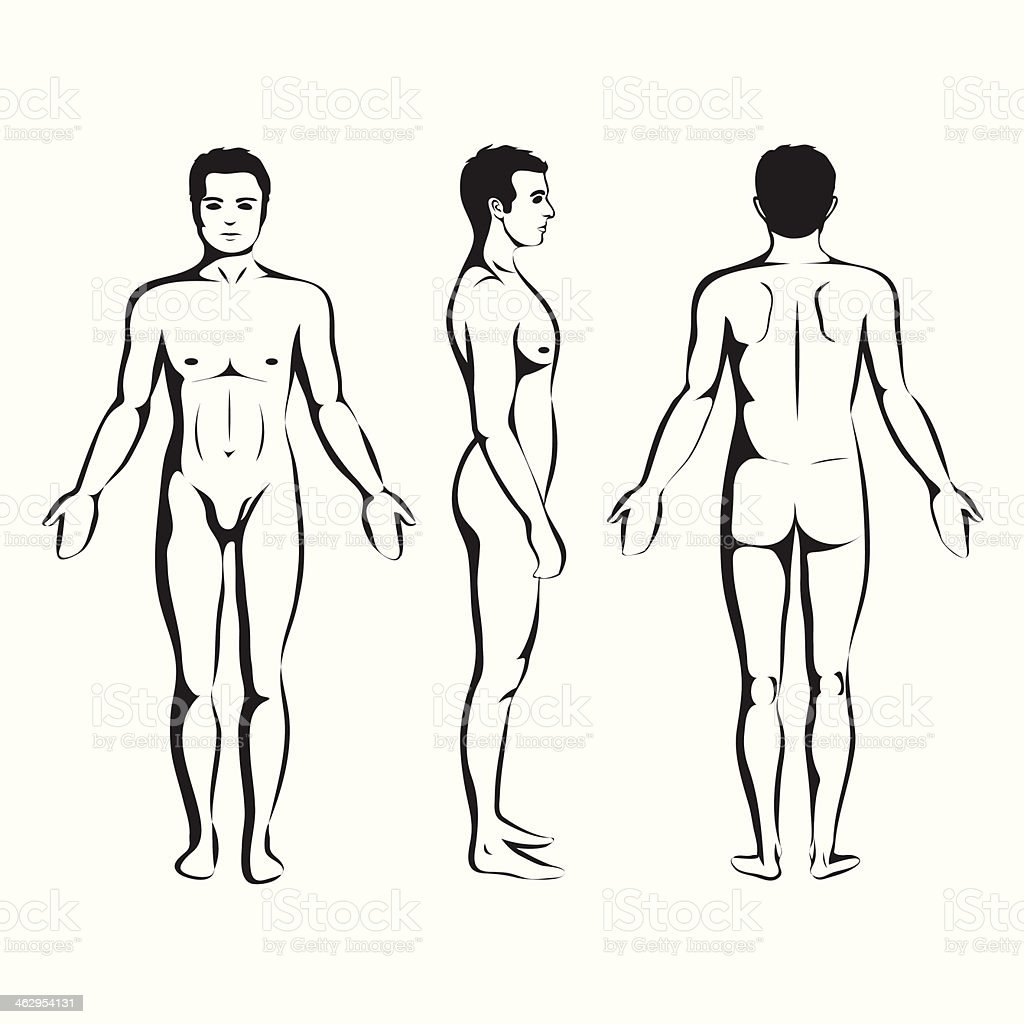 man body anatomy, front, back and side vector art illustration