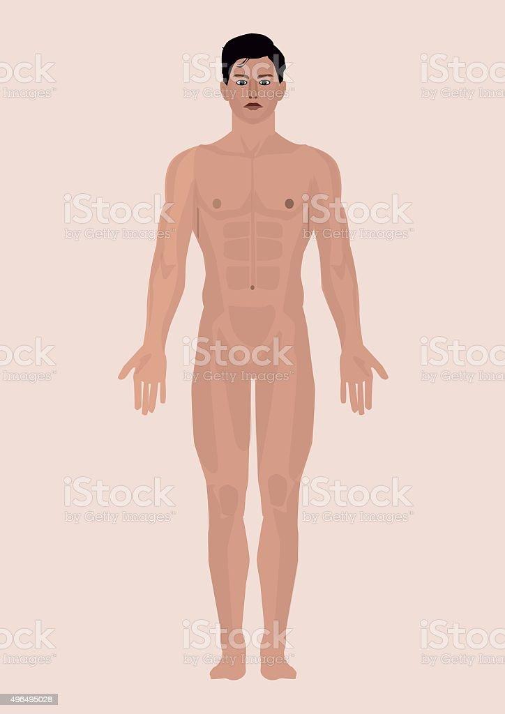 ILLUSTRATION OF man body anatomy, front standing vector human pose vector art illustration