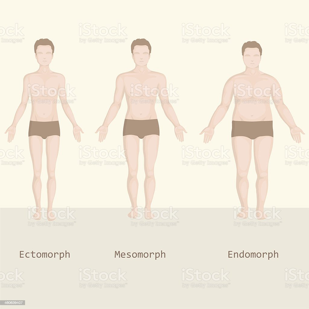man body type, from fat to fitness, before and after royalty-free stock vector art