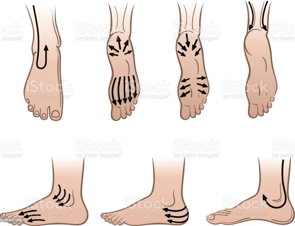 Man feet with massaging lines vector art illustration