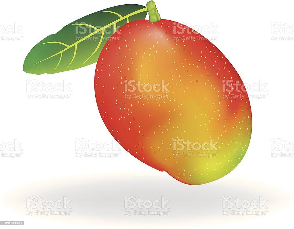 Mango Fruit vector art illustration