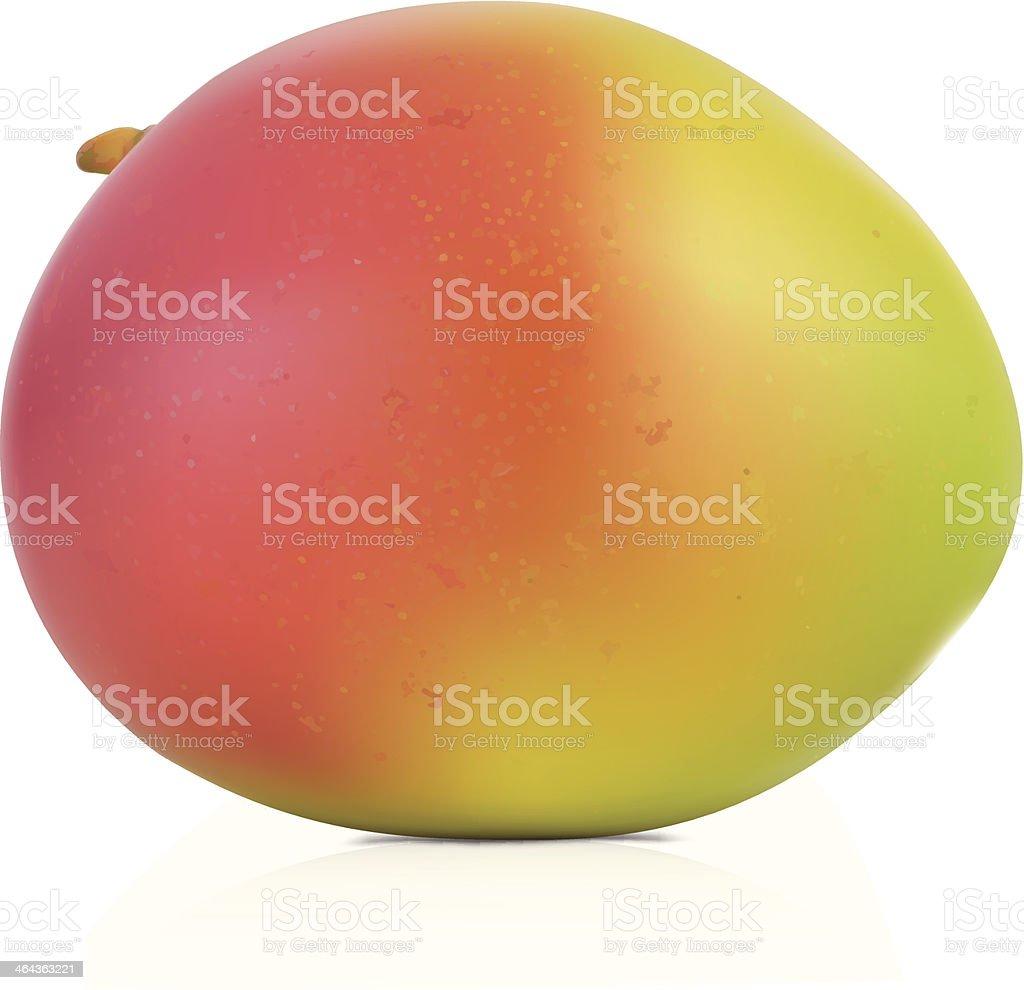 Mango - Vector Illustration vector art illustration