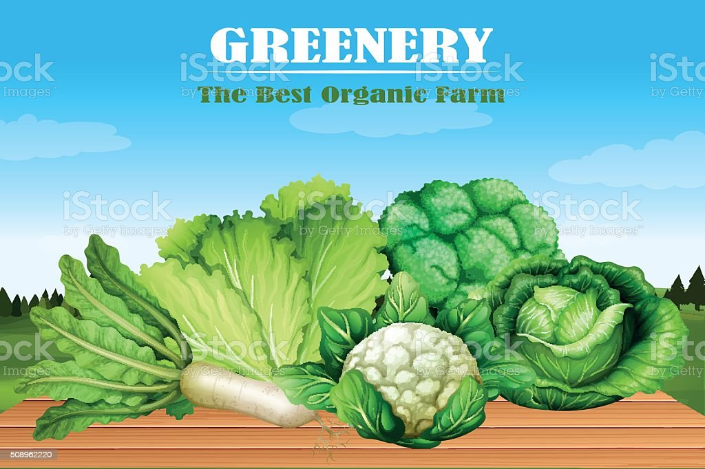 Many kind of green vegetables vector art illustration