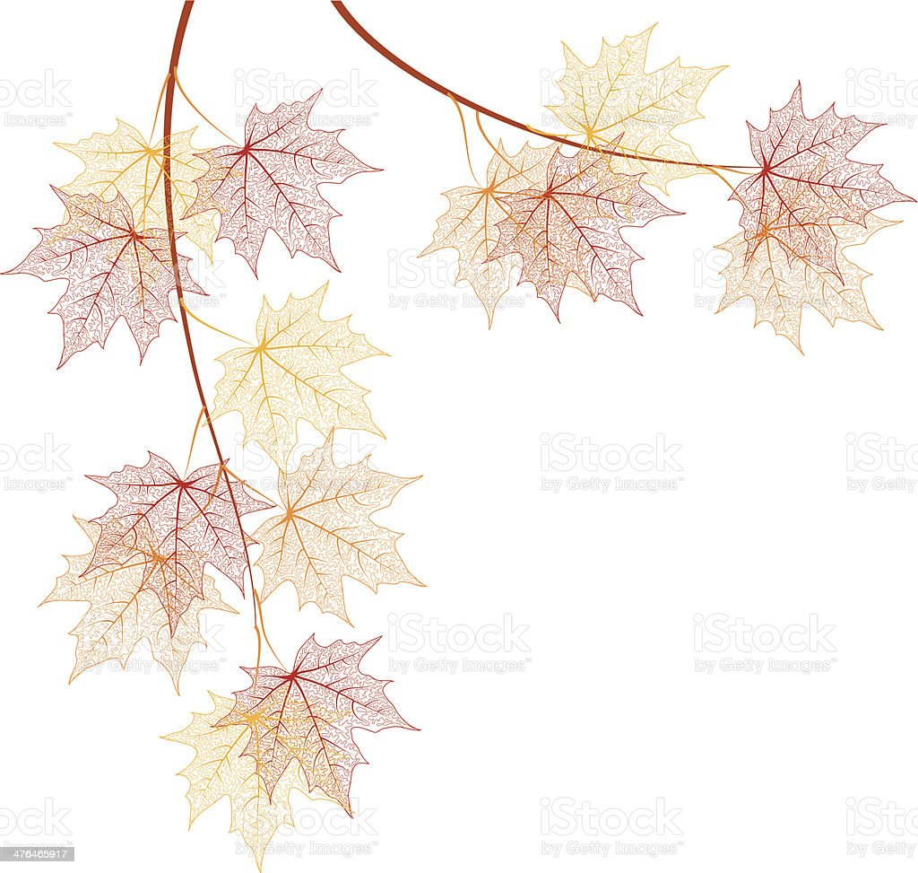 Maple branches vector art illustration
