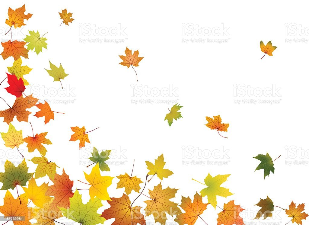 Maple leaves falling vector art illustration