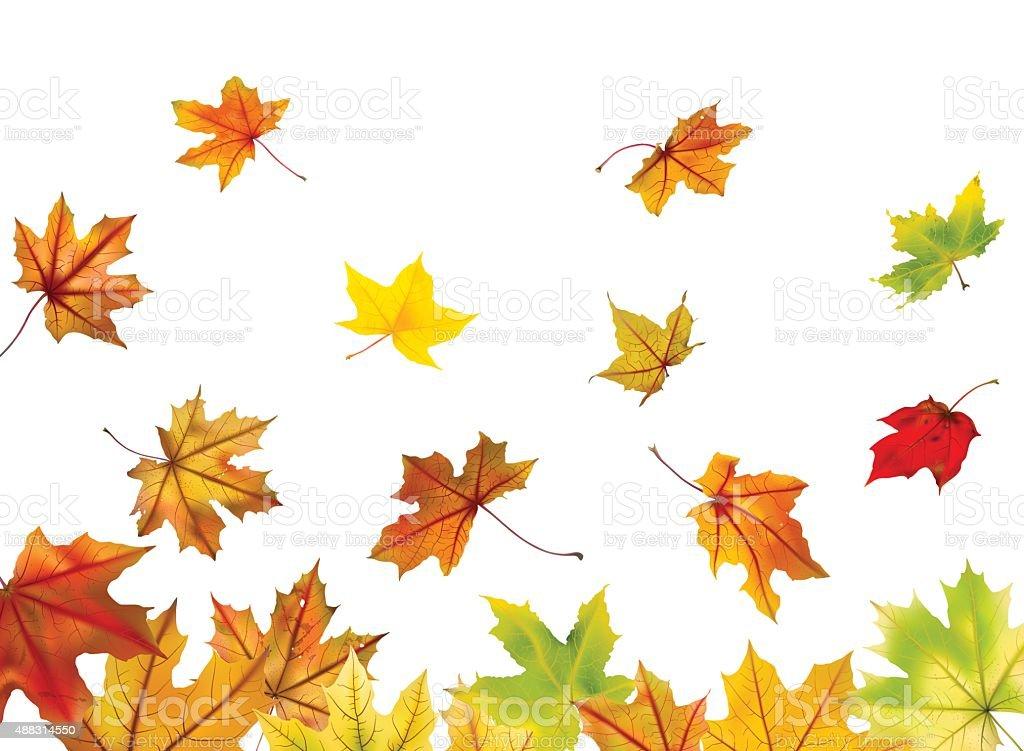 Maple leaves falling vector art illustration