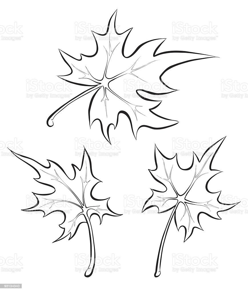 Maple leaves. Freehand drawing. vector art illustration