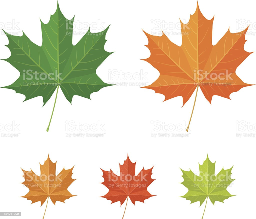 Maple leaves - vector icons vector art illustration