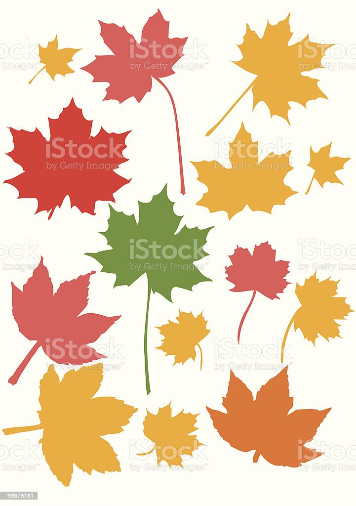 Maple leaves vector art illustration