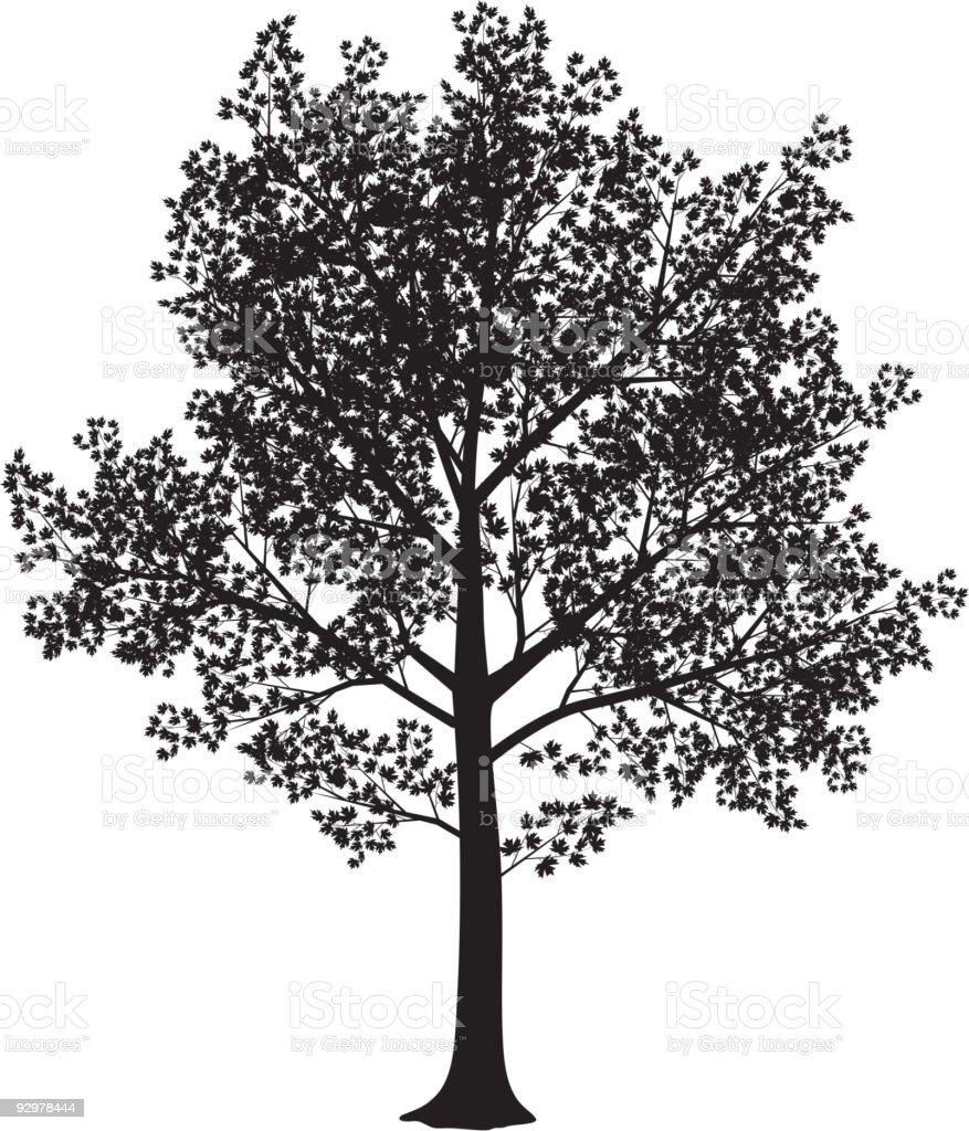 Maple silhouette vector art illustration