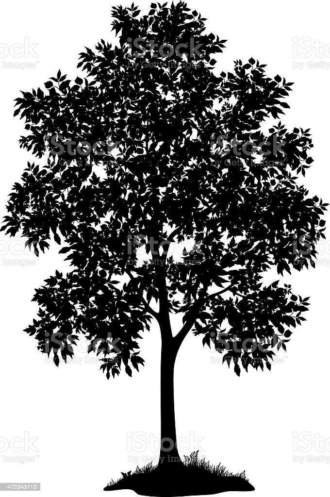 Maple tree and grass, silhouette vector art illustration