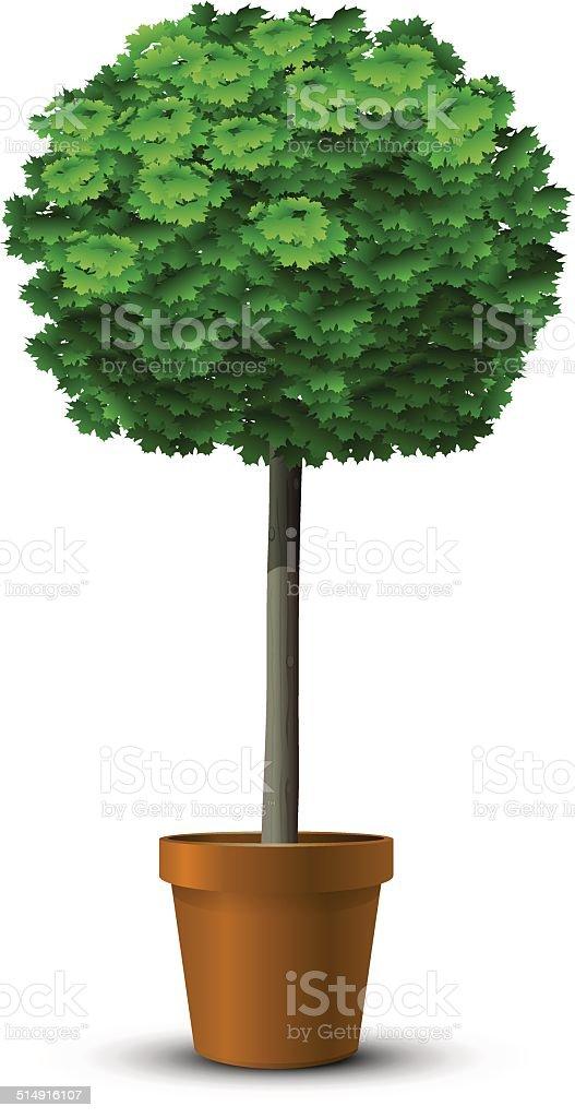 maple tree globosum vector art illustration