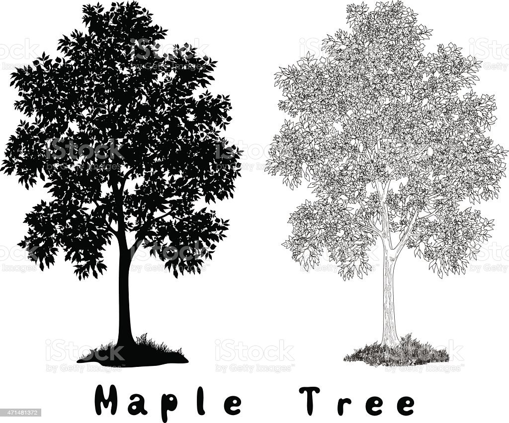 Maple Tree Silhouette, Contours and Inscriptions vector art illustration