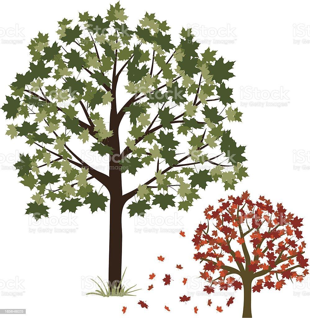 Maple tree royalty-free stock vector art