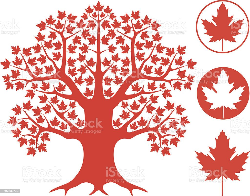 Maple tree vector art illustration
