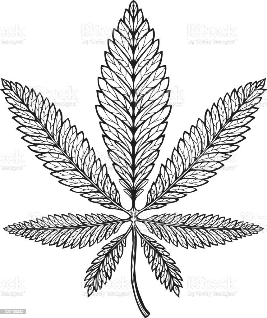 Marijuana ethnic graphic style. Cannabis, marihuana or hemp symbol vector art illustration