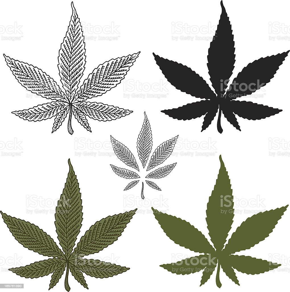Marijuana Leaf royalty-free stock vector art
