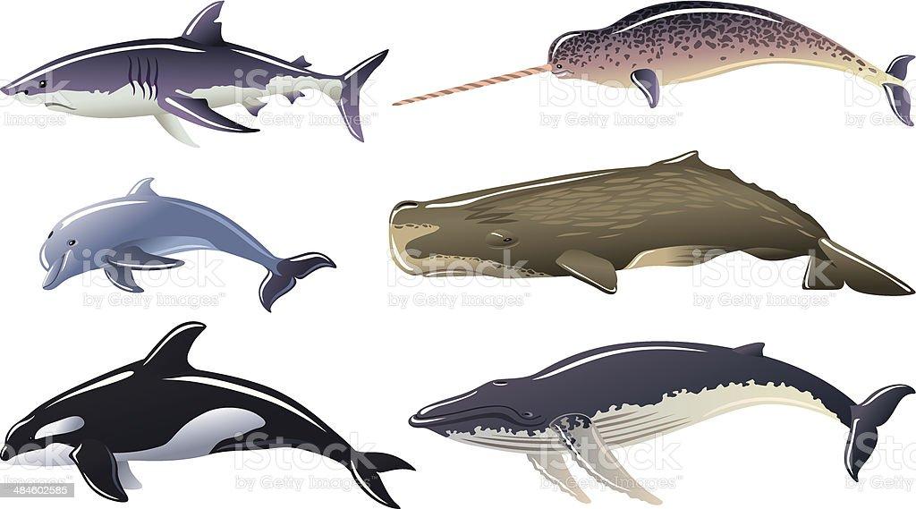 Marine mammals royalty-free stock vector art