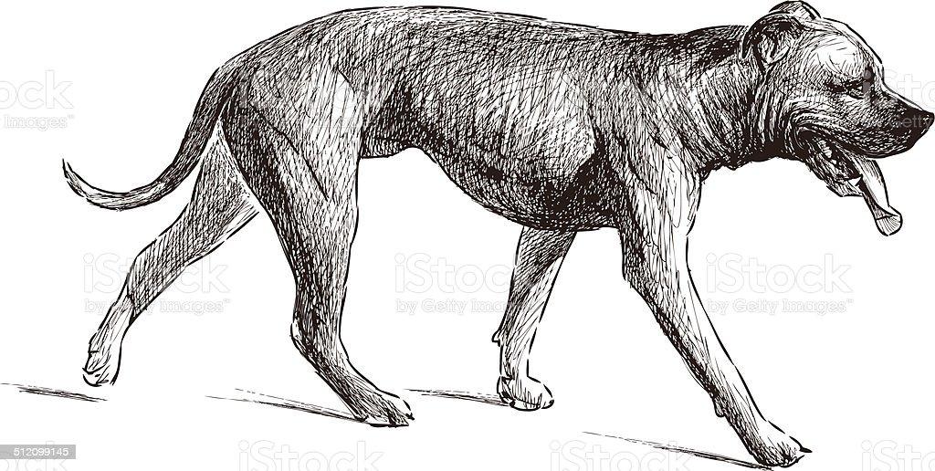 mastiff vector art illustration