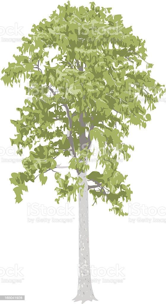 Matai Tree royalty-free stock vector art