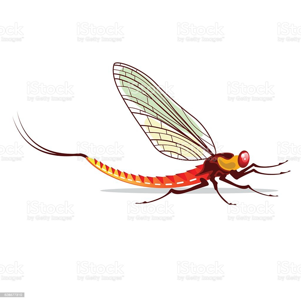 Mayfly vector illustration vector art illustration
