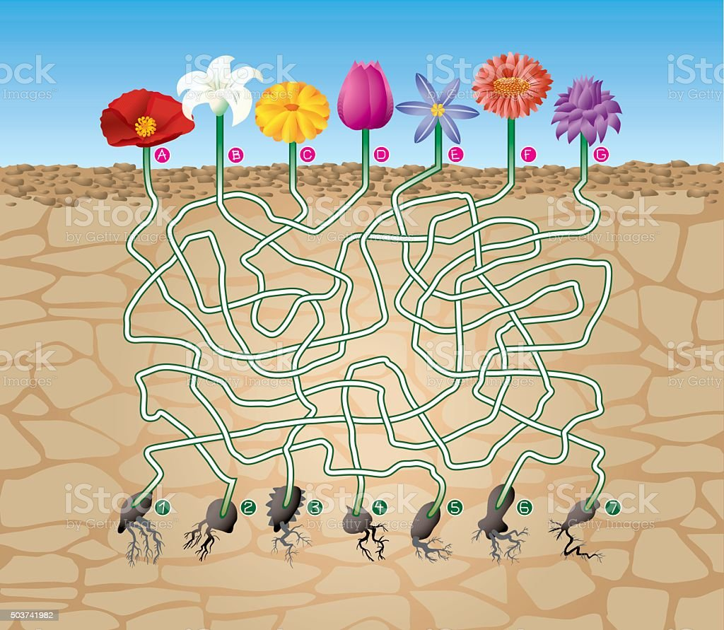 Maze Game What Seed vector art illustration
