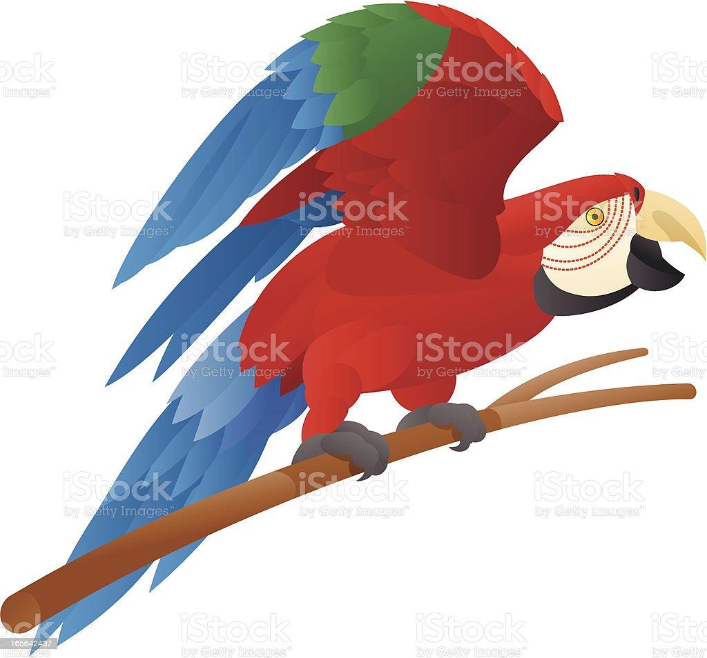 McCaw Parrot vector art illustration
