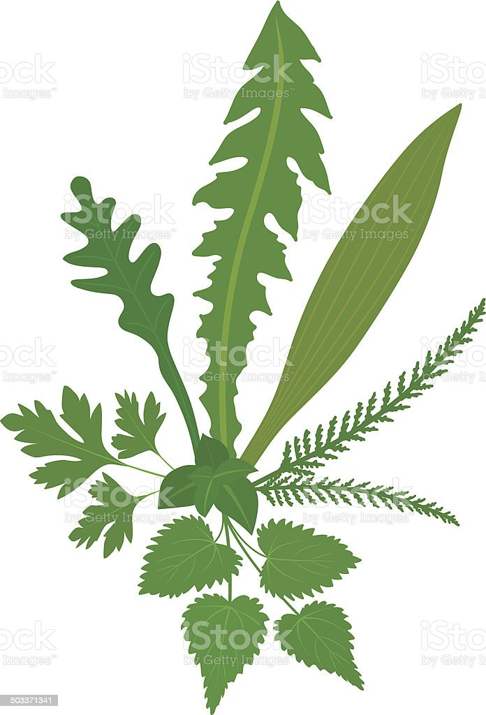 Meadow Herbs vector art illustration