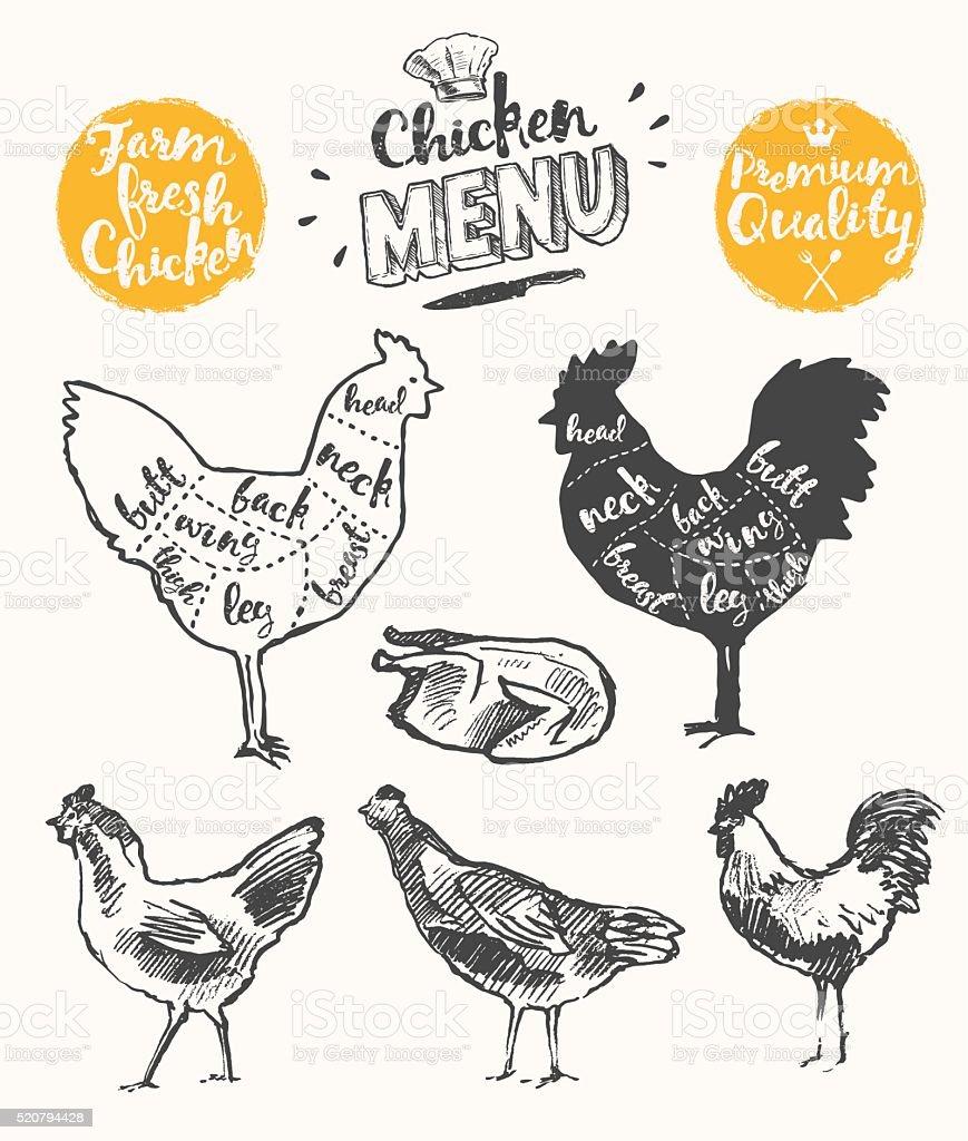 Meat menu scheme chicken cuts drawn vector vector art illustration
