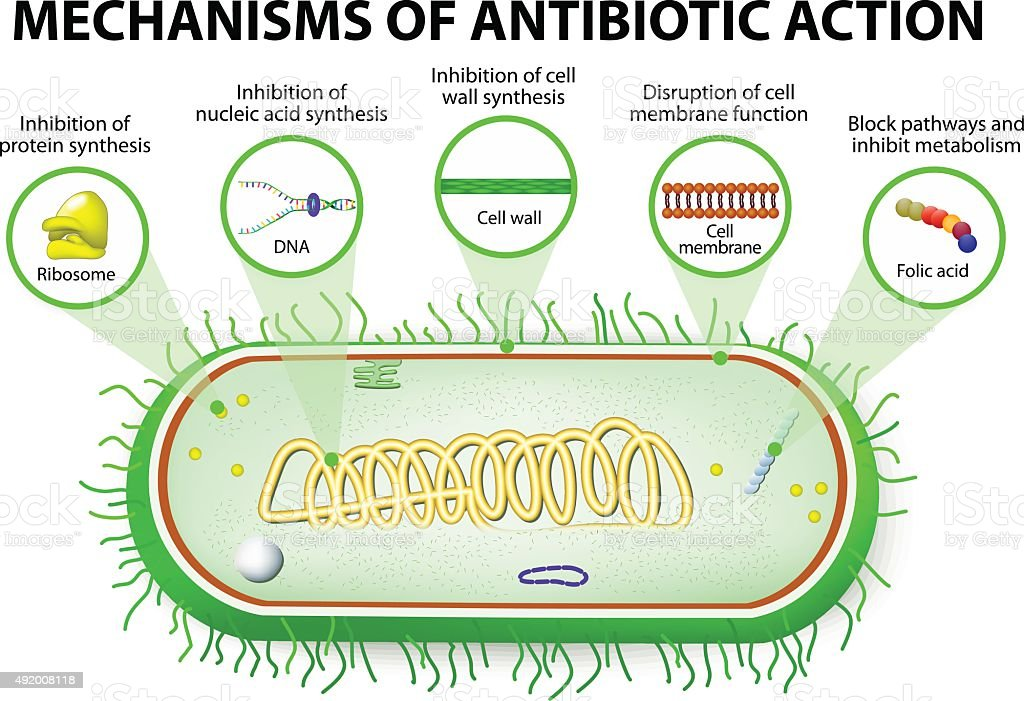 Mechanisms of Action of Antimicrobials vector art illustration